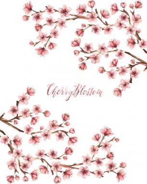 Cherry blossom, spring flowers