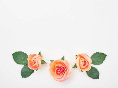 Flat lay. Top view. Pink roses on white background. Frame wreath stock vector