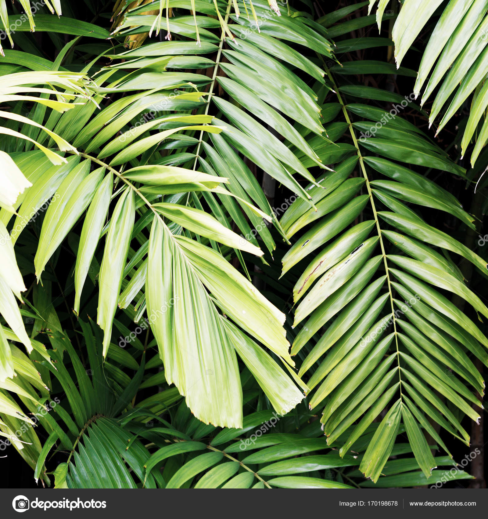 Minimal Style Minimalist Fashion Photography Tropical Leaves Stock Photo C Looking 2 The Sky 170198678 Tropical leaves a project by ilinca. https depositphotos com 170198678 stock photo minimal style minimalist fashion photography html