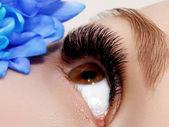 Gyönyörű makró lövés a klasszikus tiszta smink női szemmel. Tökéletes alakját hosszú szempillák és szemöldök. Kozmetika és smink. Vértes makro szemcsésedik-ból divat szeme természetes smink