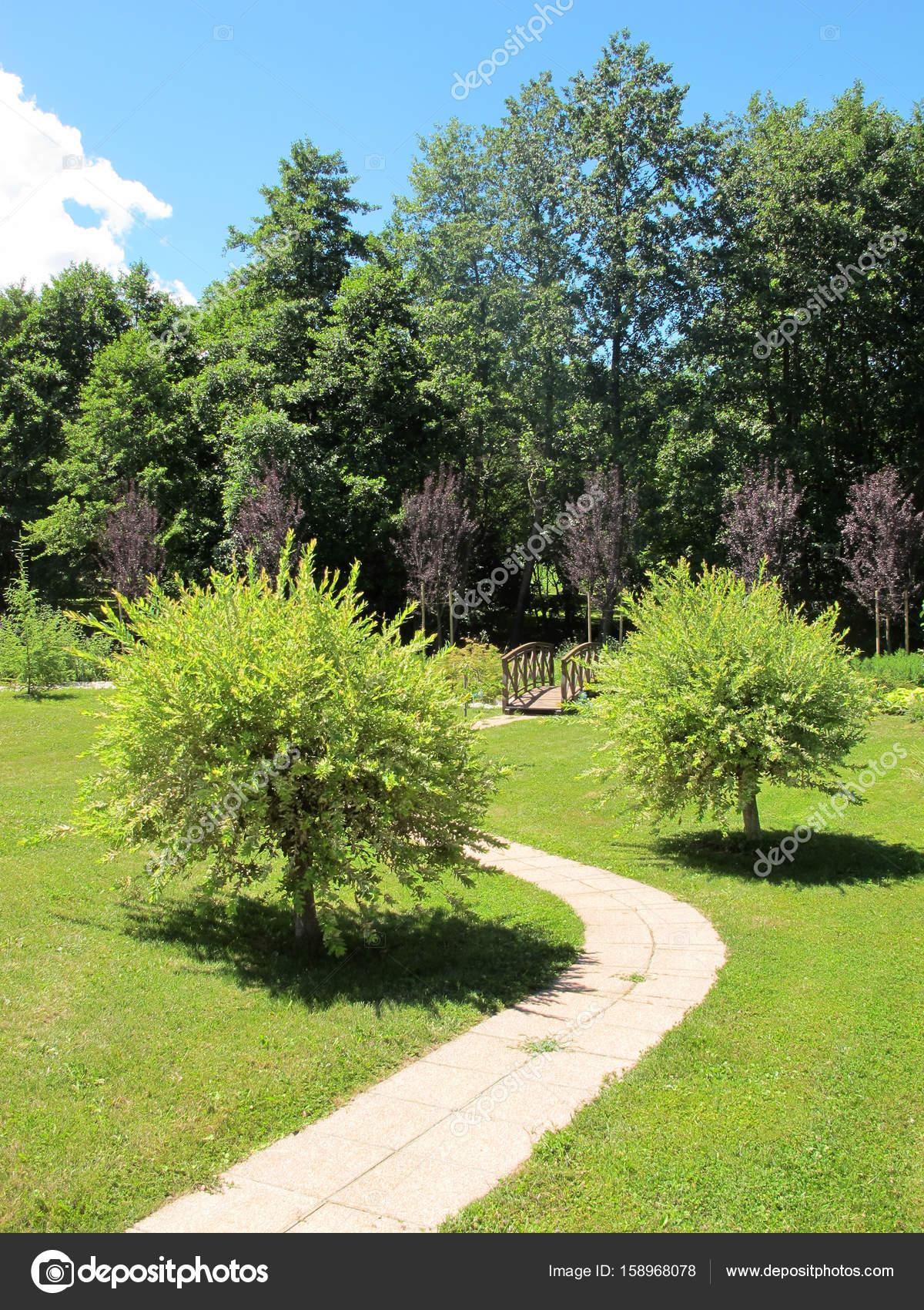 Japanische Weide Bäume In Einem Gepflegten Garten Stockfoto
