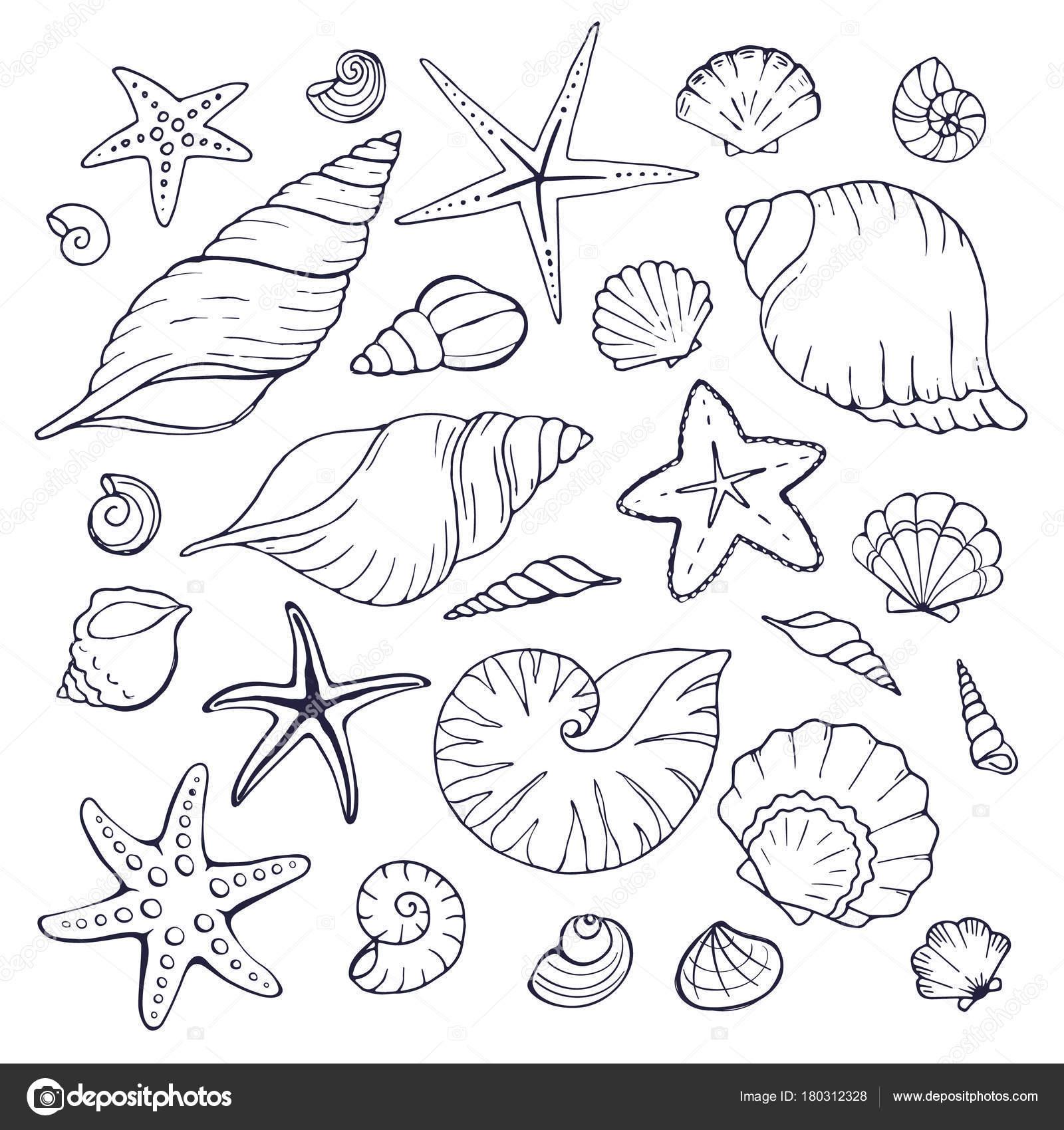 Imágenes Mariscos Para Colorear Colección De Conchas De Mar