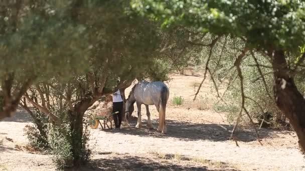 Dívka, krmení koní na farmě