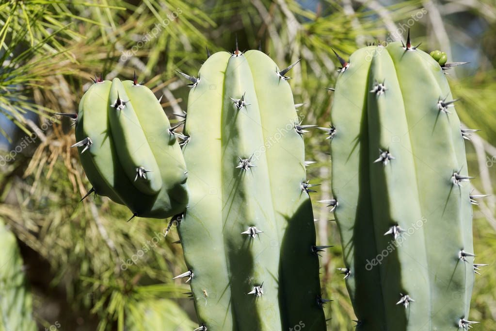 Close-up of a cactus in the garden
