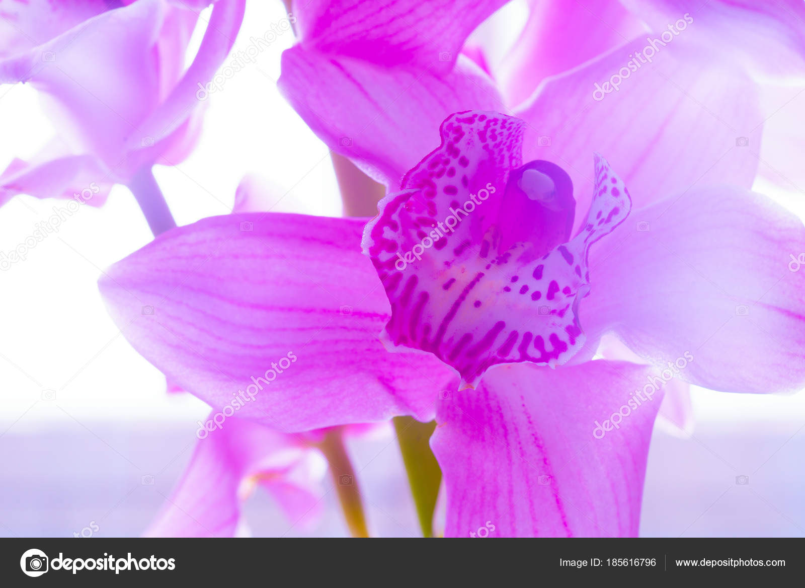 L Orchidee Fleurs Beautiful Floral Fond Pour Fonds D Ecran