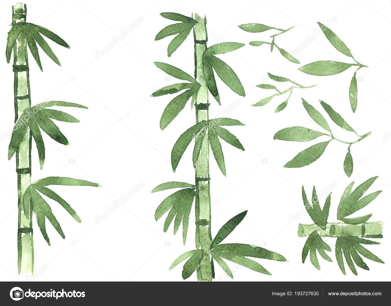 Feuilles De Bambou Des Tiges Et Des Troncs Vert Sur Fond