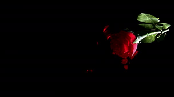 Rote Liebesrose fällt zu Boden und bricht pov Schuss Zeitlupe