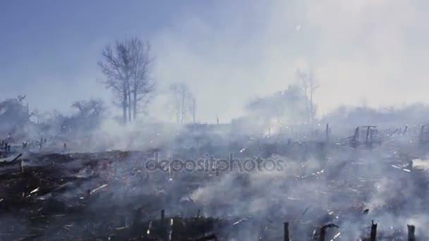 destruction in nature