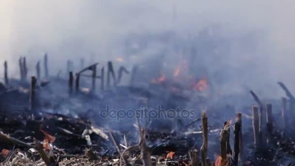 Charakter poškození ekologické ničení životního prostředí