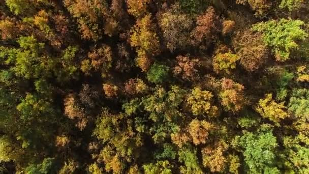 fall nature beauty forest trees scenery drone view