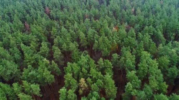 zelené stromy flyover borovice les příroda scenérie