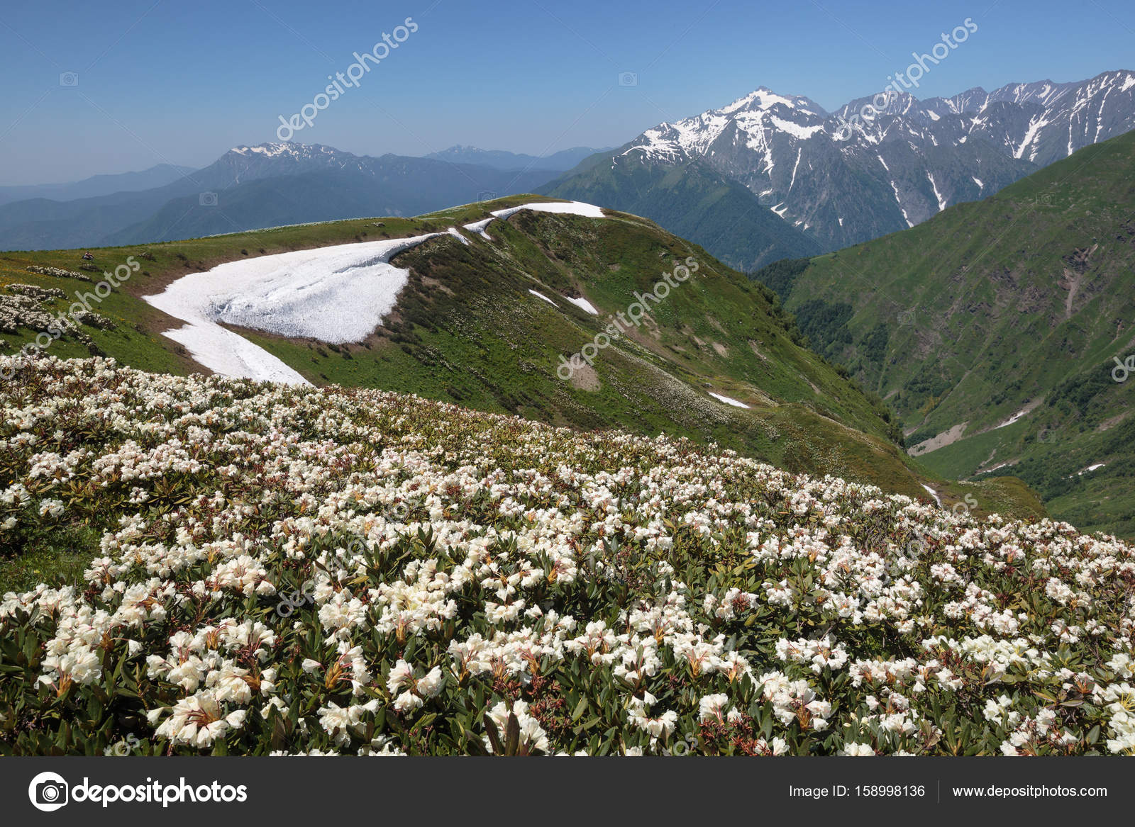 Горные цветы в красной поляне