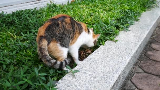 4 k život místní kočky v parku to něco udělat