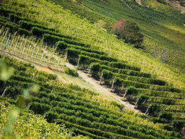 Langhe vineyards and hills in autumn