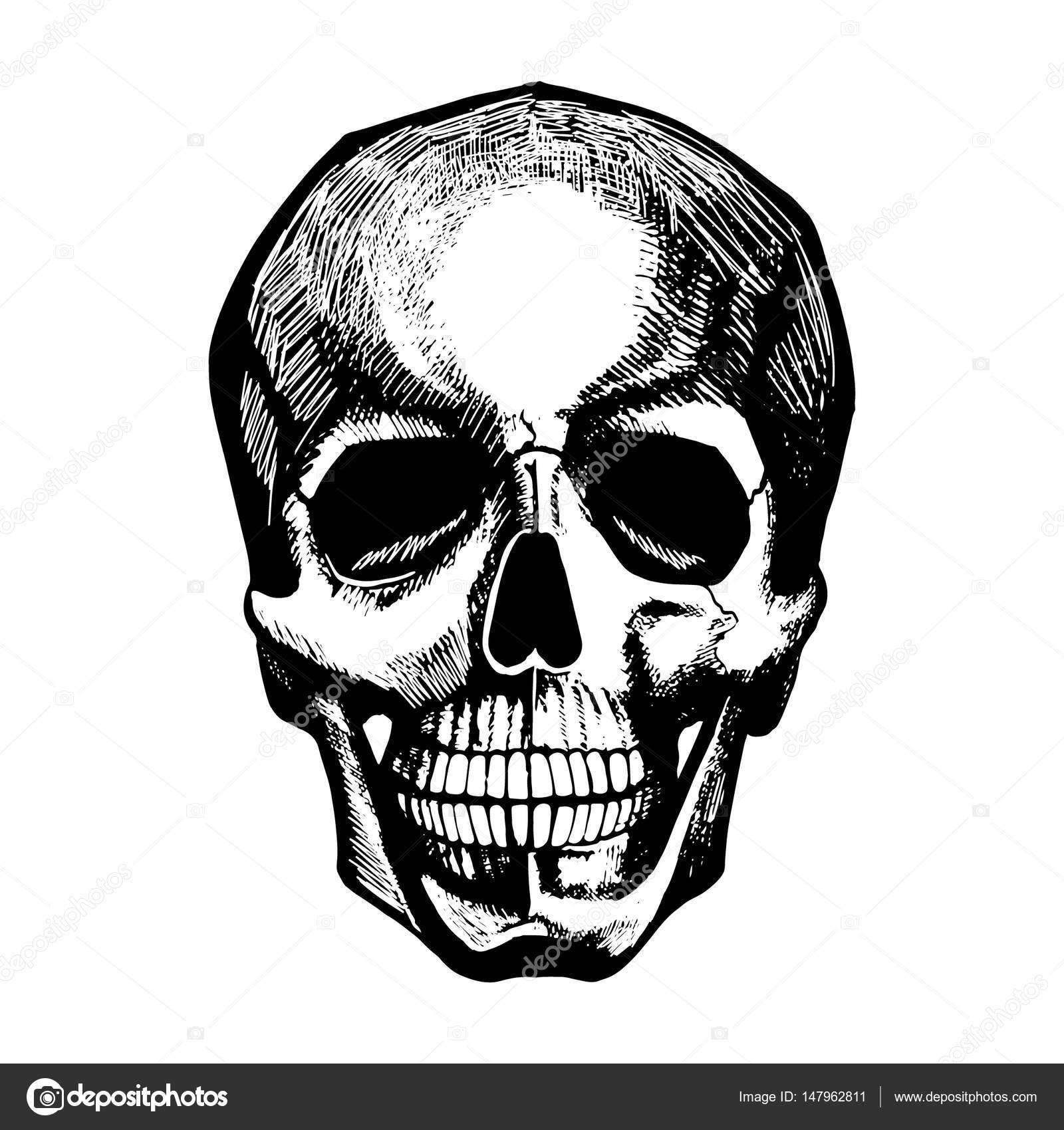 Vektor-Porträt der menschlichen Schädel. Vintage handgezeichnete ...