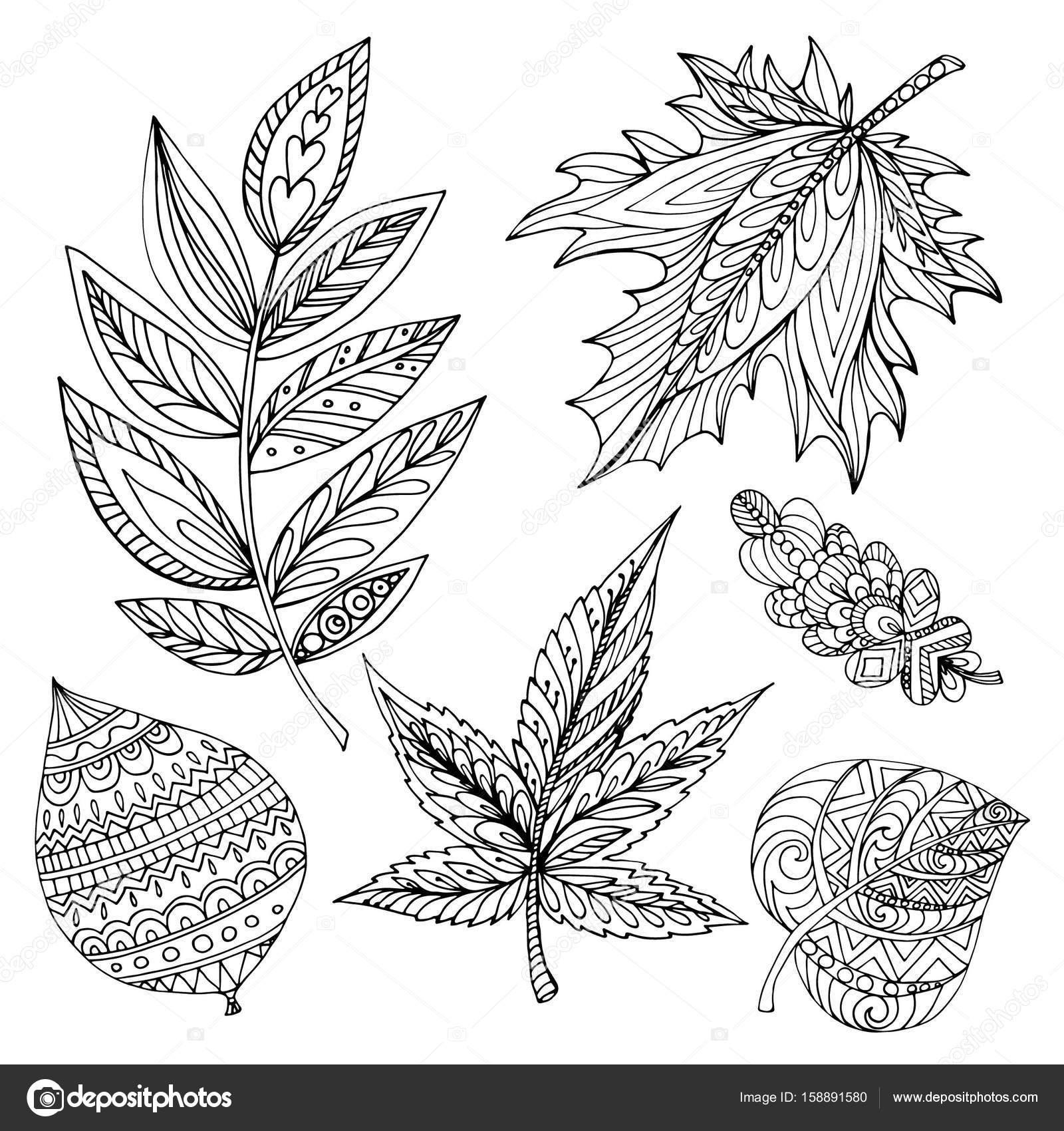 Imágenes Un Roble Para Dibujar Colección De Otoño