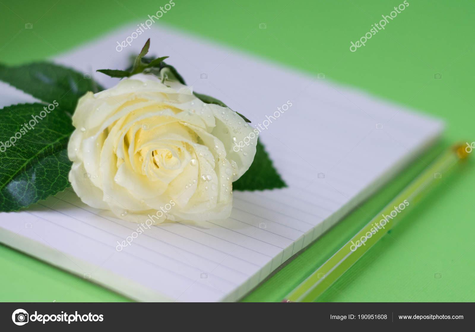 Single Shining White Rose Pink Pen Notebook Greeting Card Writer