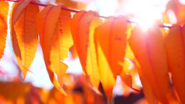 Sun shining through the autumn leaves