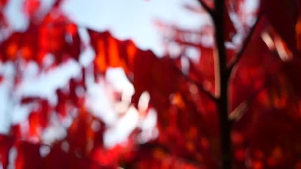Slunce svítí skrz barevné podzimní listí