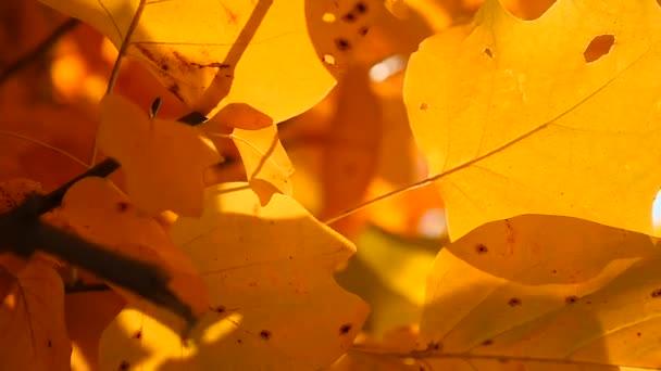 Větev s žlutými listy. Podzimní koncepce.