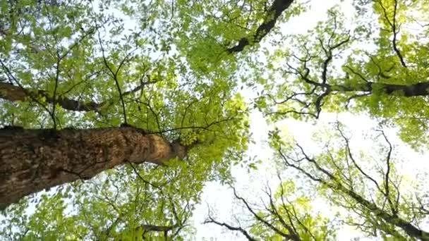 zelený Les se starými stromy