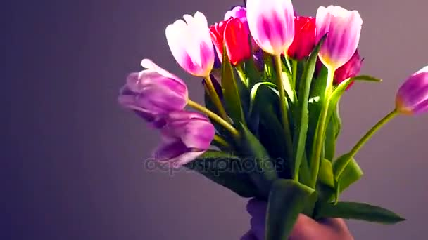 Spring time, Happy Mothers Day! Close-up of a bouquet of tulips on a light background