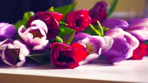Gyönyörű csokor színes tulipán. Tavasszal, Boldog anyák napja.
