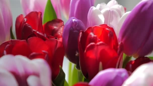 Close-up of a bouquet of tulips on a light background.