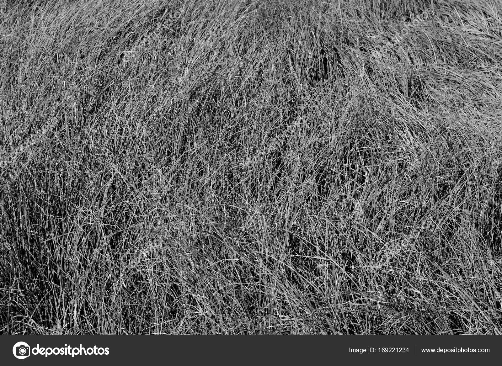 wild grass texture. Faded Wild Grass Pattern In Black And White. Abstract Natural Background  Texture. \u2014 Photo By Pavelalexeev Texture