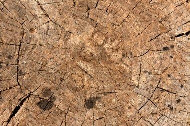 Old tree cut.