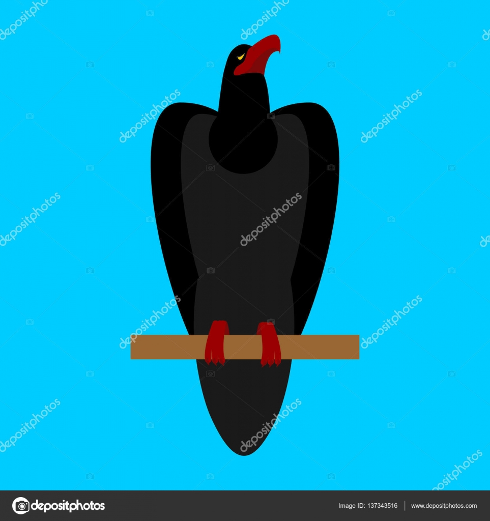 velký černý pták vtipný