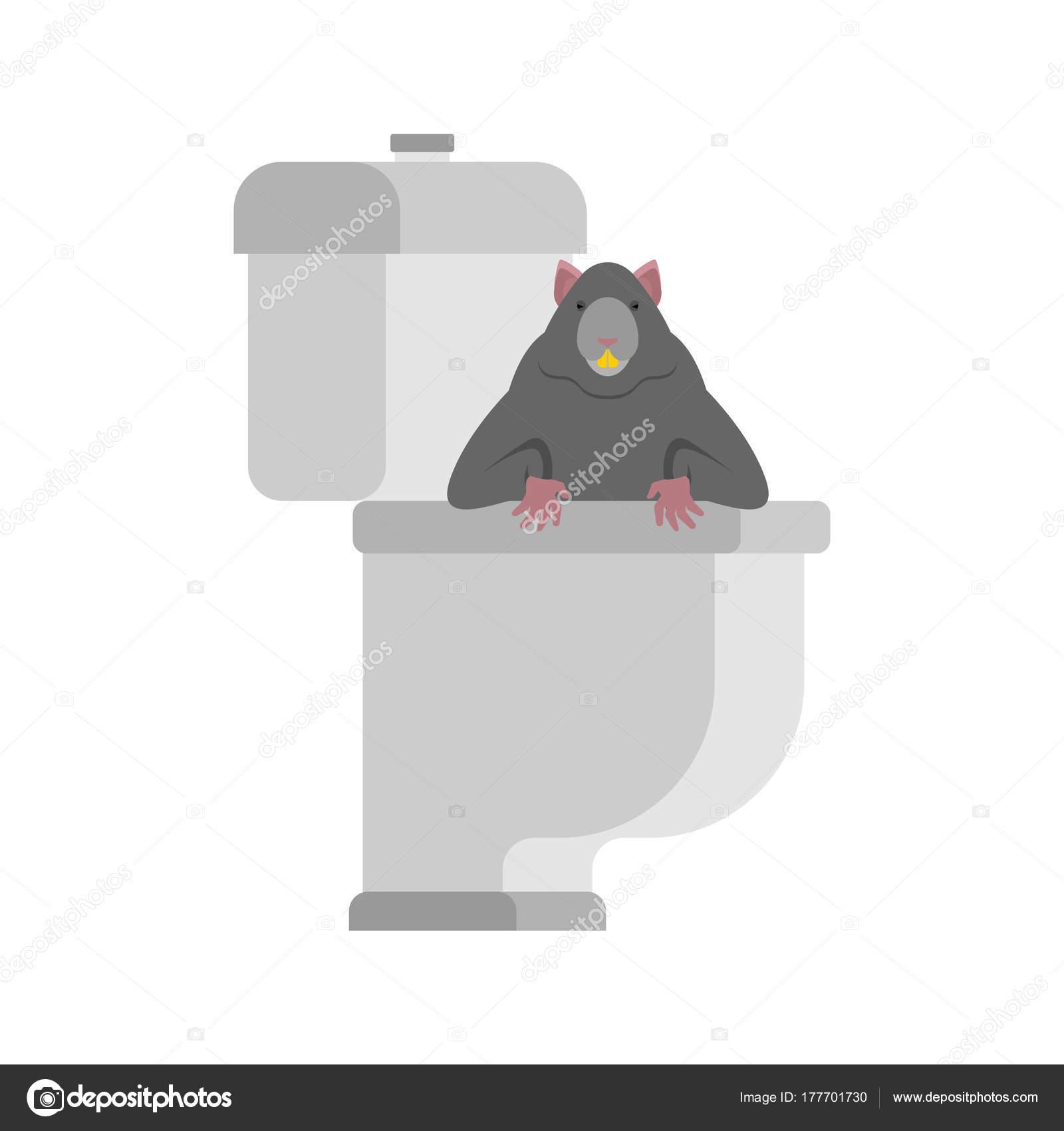 Homme Chat Rat Salle De Bain ~ rat dans les toilettes rongeur est dans wc anti santry toilettes