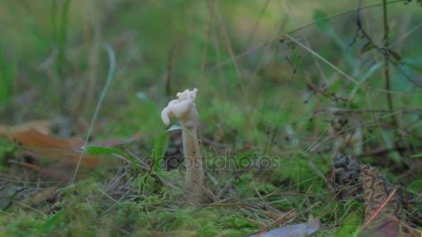 lesní houby v mechu
