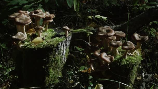 erdei gomba, a moha, a gomba az erdőben