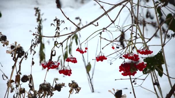 velké sněhové vločky padají pomalu