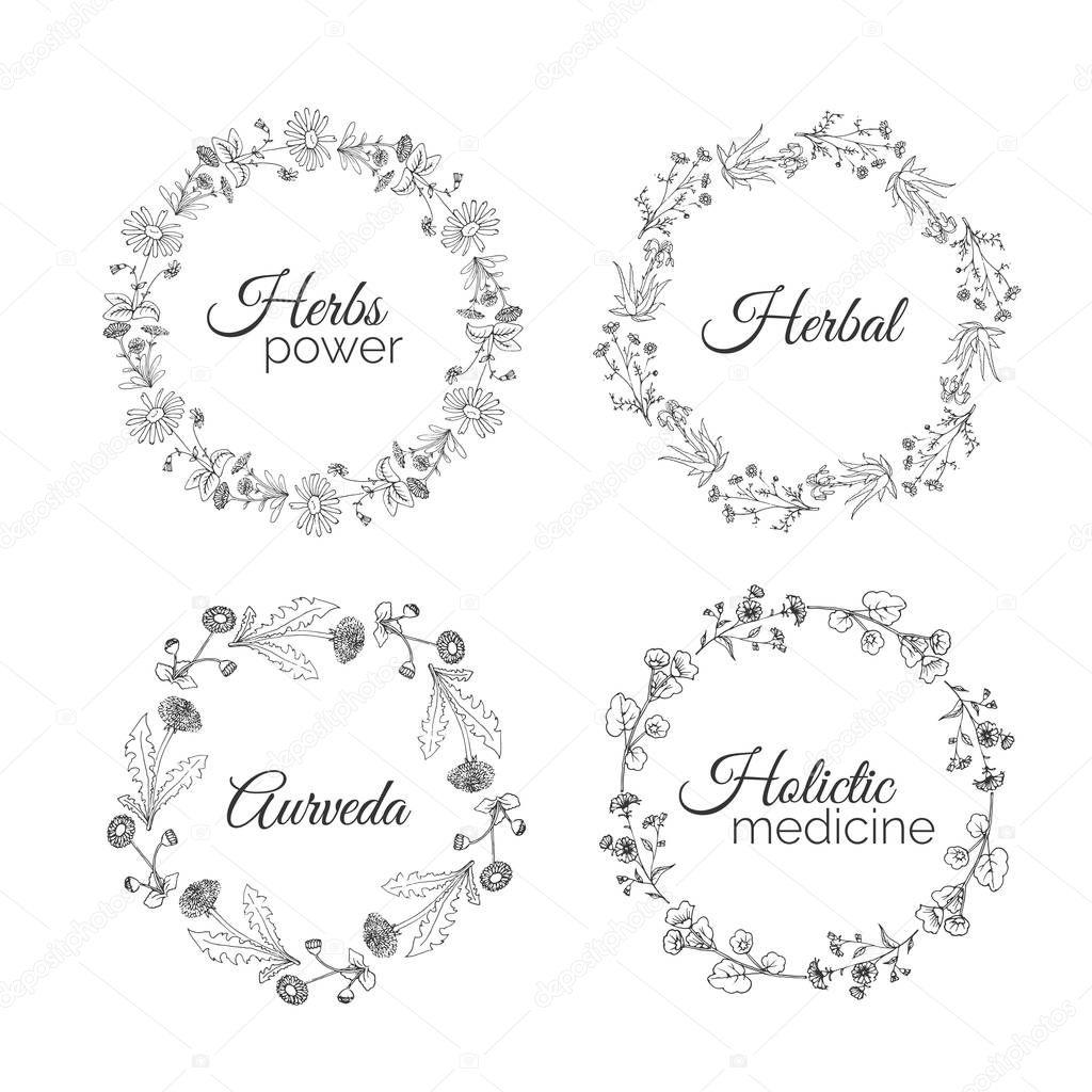 Herbs Illustration. Floral frames.