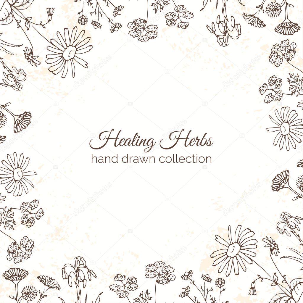 ハーブのイラスト。花のフレーム — ストックベクター © kamimi #129732556
