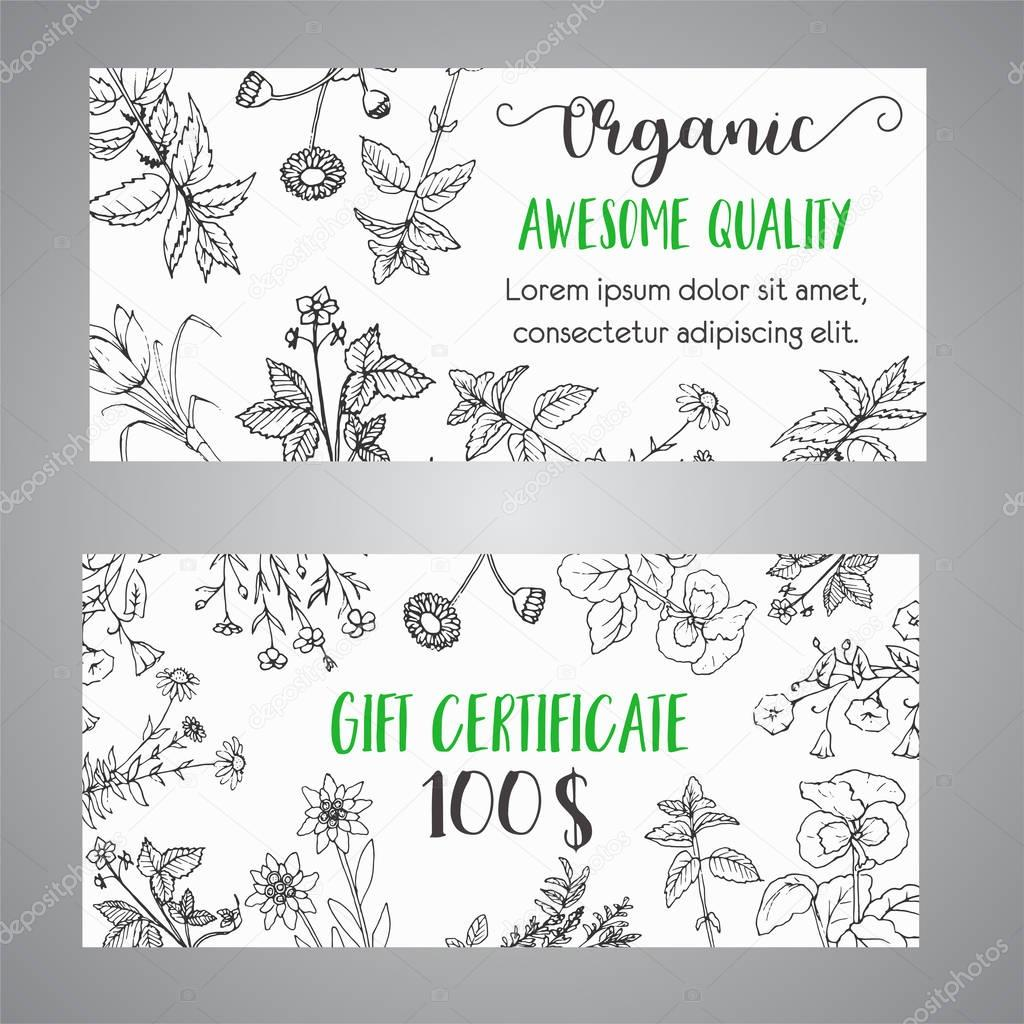 Herbs and Wild Flowers. Hand drawn herbal gift certificate with spices, medicinal, cosmetic plants. Illustration for beauty store advertising, brochures, flyers, cosmetology