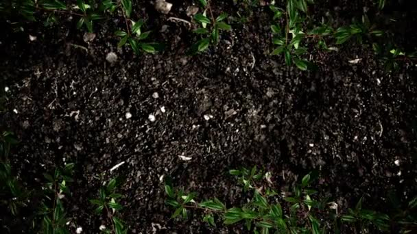 Frame of Leaves on a Soil in Stop Motion
