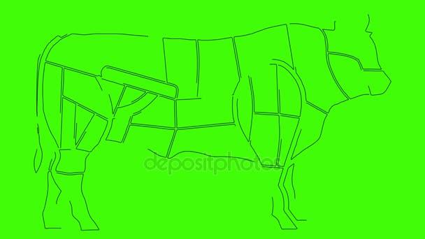 Diagramas de la anatomía del cuerpo de vaca para propósitos de la ...