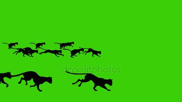 Rajzfilm animációs egy nagy csoport a fekete macskák a Green Screen Háttér