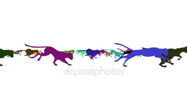 Group of Colorful Running Cats on a White Background