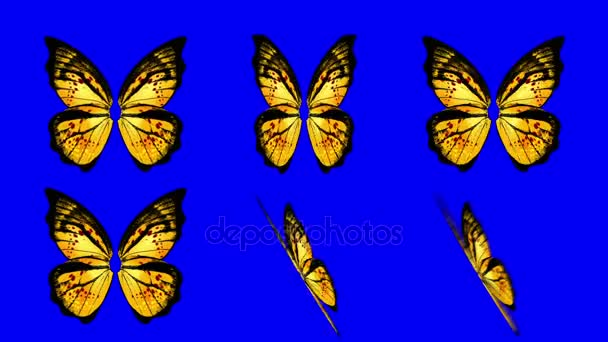 A set of Orange Butterfly Wings Waving in Different Speed and Angles on a Blue Screen Background