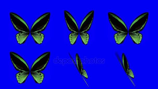 Sada Orange motýl křídly mává v různých rychlostí a úhly na modrém pozadí obrazovky