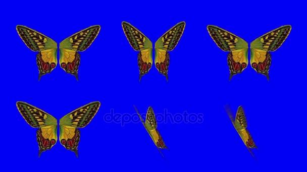 Egy sor narancs pillangó szárnyak integetett a különböző sebesség és a szög a kék képernyő háttér