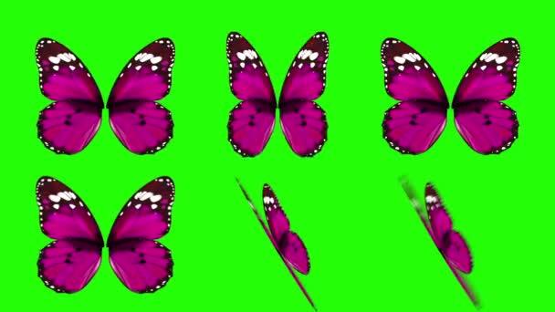 Sada růžový motýl křídla mává v různých rychlostí a úhly na pozadí obrazovky zelené