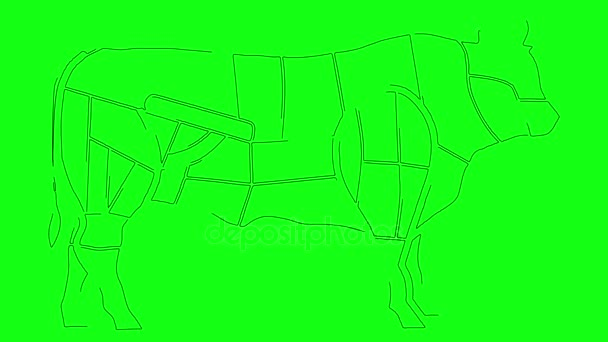 Diagramme der Kuh Körper Anatomie Küche Zwecken auf einem grünen ...