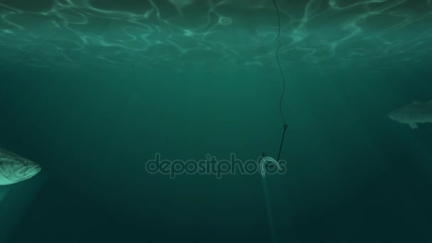 Big Fish and a Fish Hook with Bait Underwater