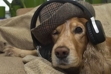Dog listens to music in headphones