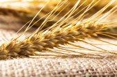 Fotografia dorate spighe di grano